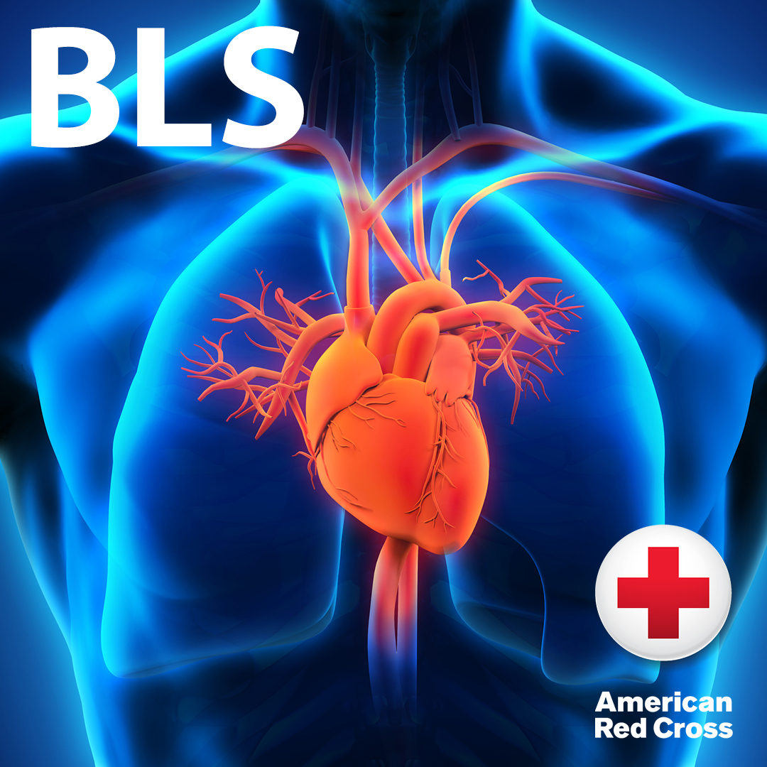 American Red Cross BLS Certification